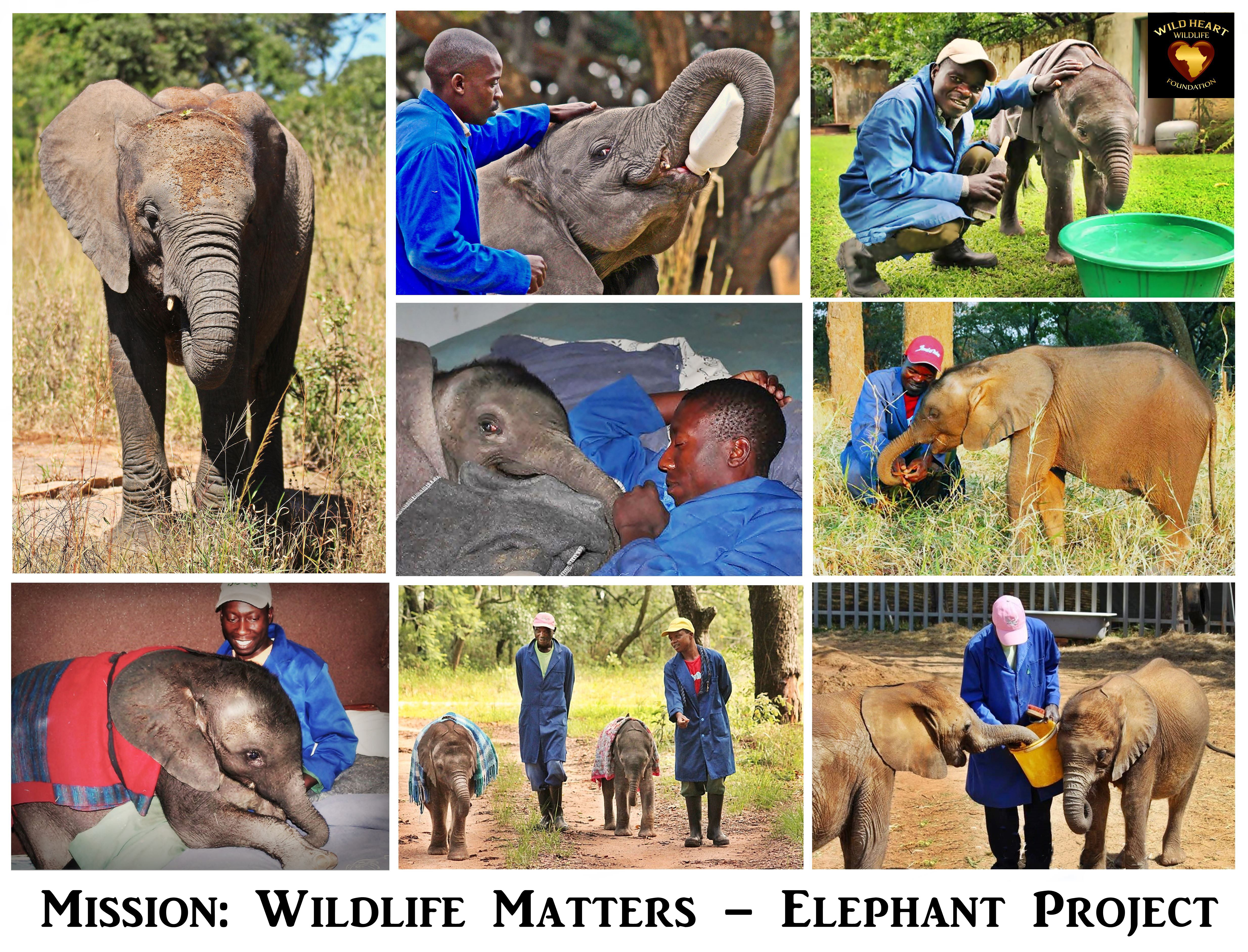 How Can You Help Wild Heart Wildlife Foundation Animal Scarer Hobby Circuits And Projects Elephant Babies Need Special Milk Formula Which Cost About Usd40 Per Tin Each Baby Needs At Least 30 Tins Month
